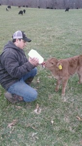 A twin! Unfortunately his mom would only take his sister so we are bottle feeding him. (I think he steals some from some of the other cows)