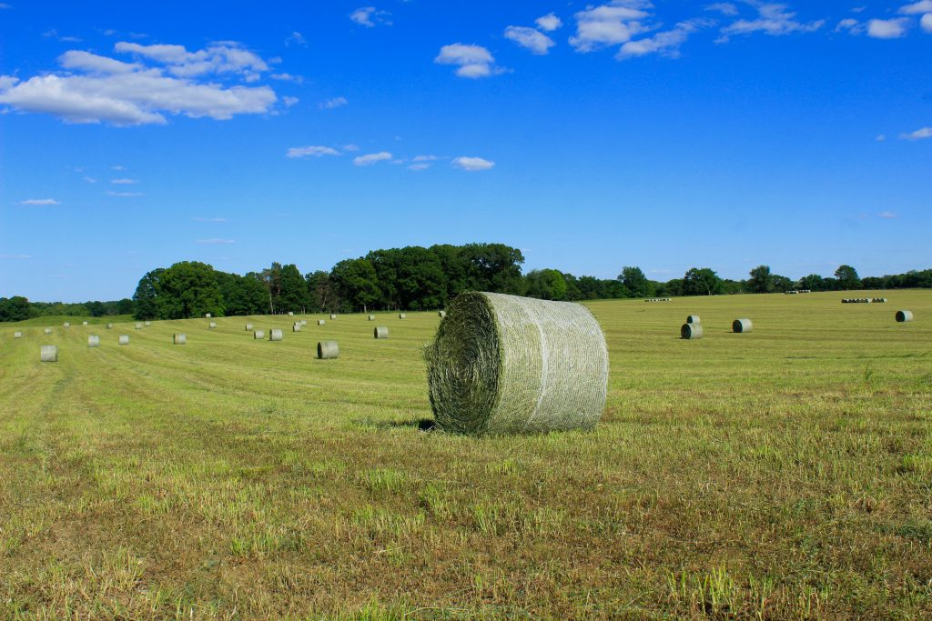 A Perfect Hay Day